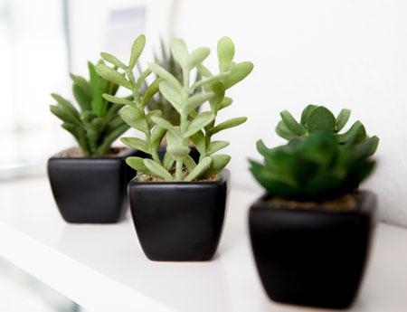 kleine pflanzen gartenhaus gebraucht. Black Bedroom Furniture Sets. Home Design Ideas